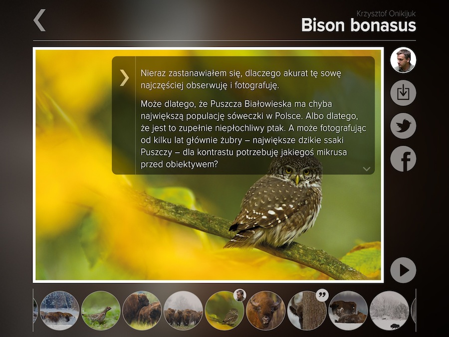bison-komentarze