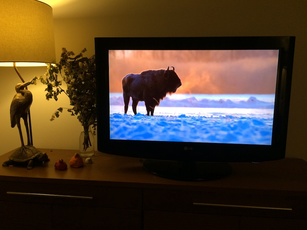 bison-bonasus-airplay-apple-tv
