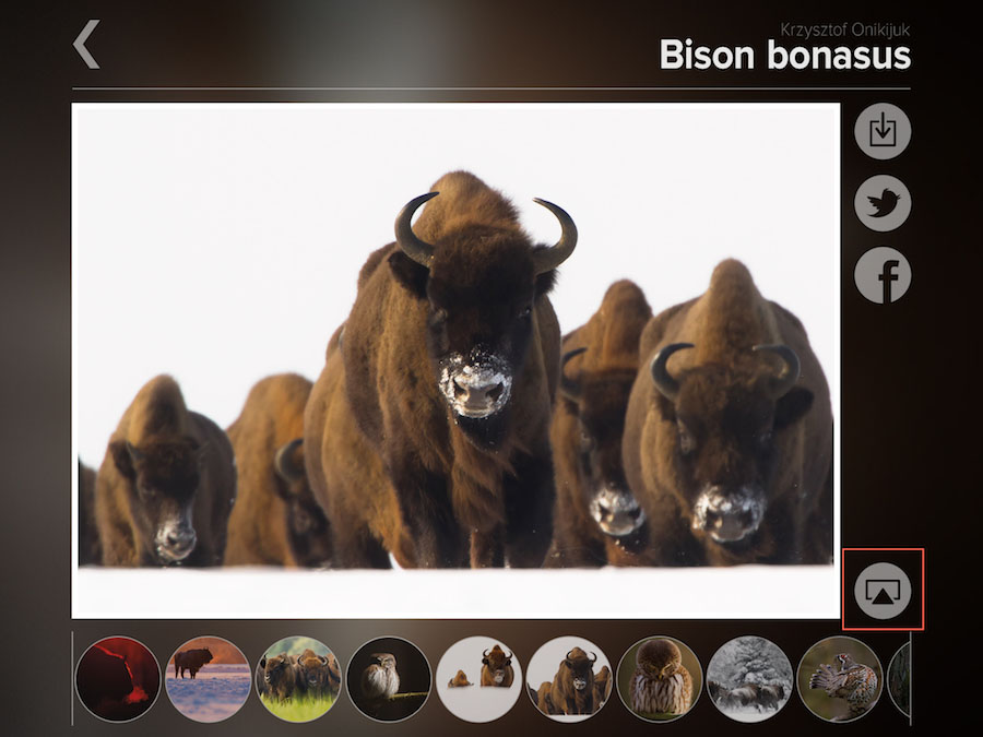 bison-bonasus-airplay-ikona